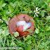 Was hilft wirklich gegen Schnecken im Garten? Schneckenfalle mit Schneckenkorn und Lockstoff im Test!