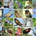 Listen Birds Voice Touch Anywhere Amazing Technology