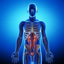 हम अपने शरीर के बारे में ये ही नहीं जानते | Interesting Facts about the Human Body