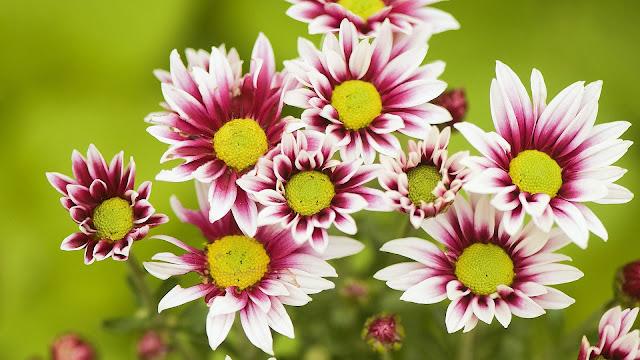 Bloemen bureaublad achtergrond