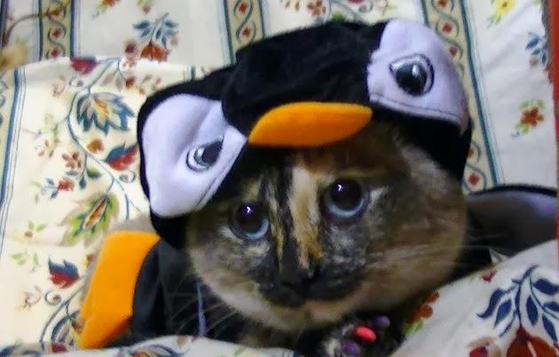 Kucing dan penguin
