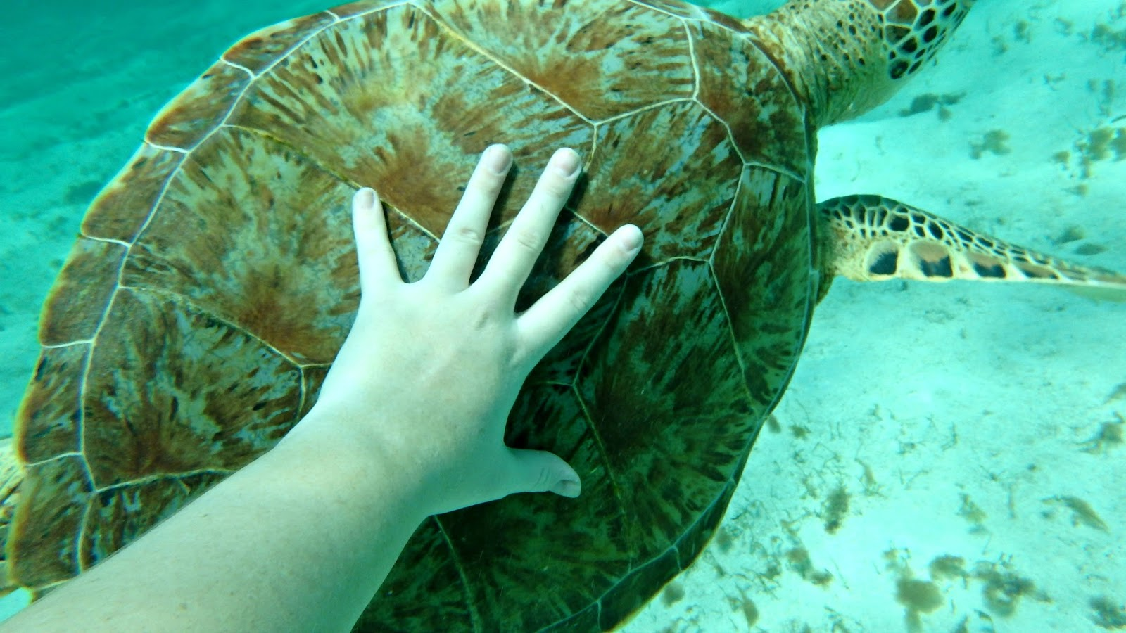 Swimming with sea turtles in the Tobago Cays Grenadines