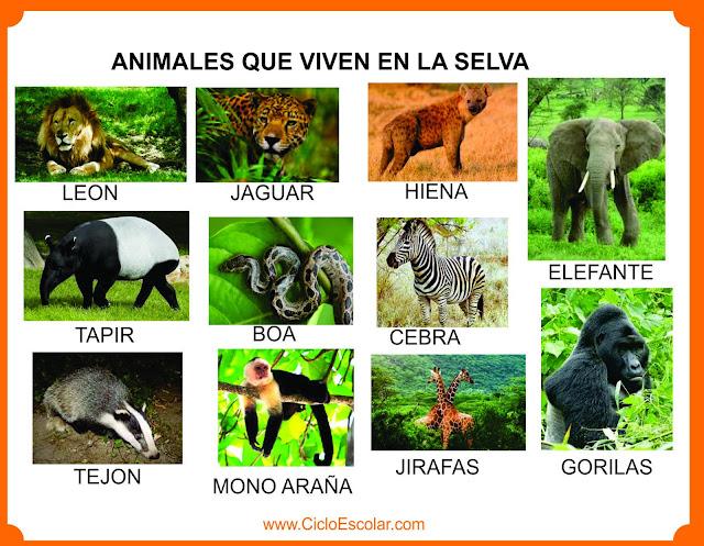 Animales que viven en el selva