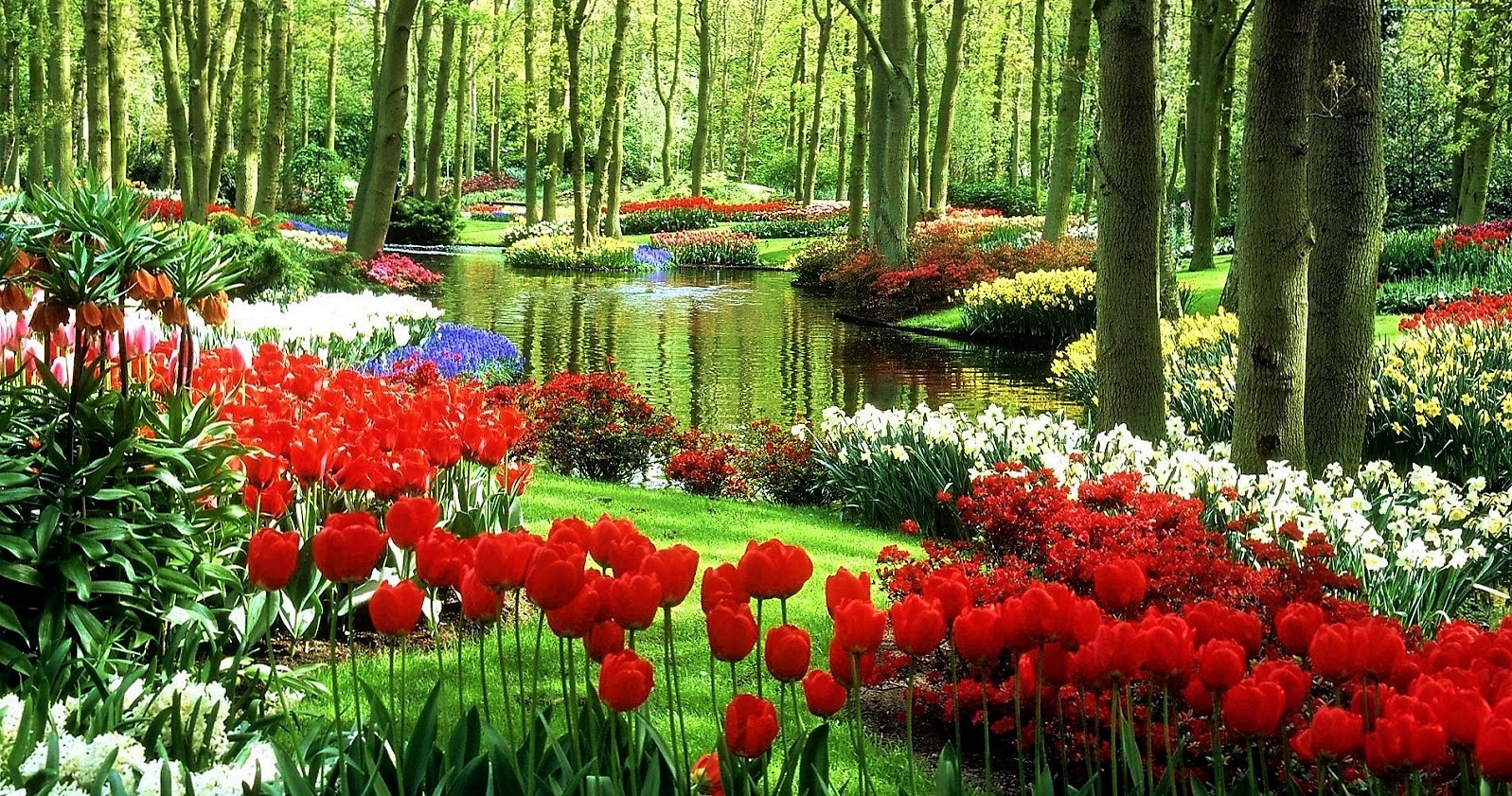 5 five 5 keukenhof gardens lisse netherlands for Beauty garden