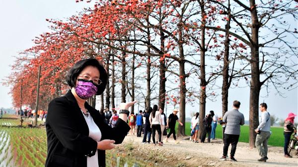 竹塘鄉木棉花季 水神樹公廟傳說創造觀光話題