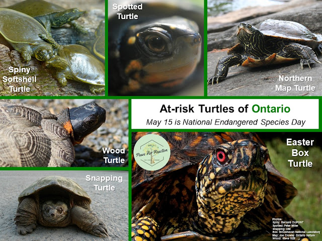Endangered Species Day: Extirpated species in Ontario and what you can do to help