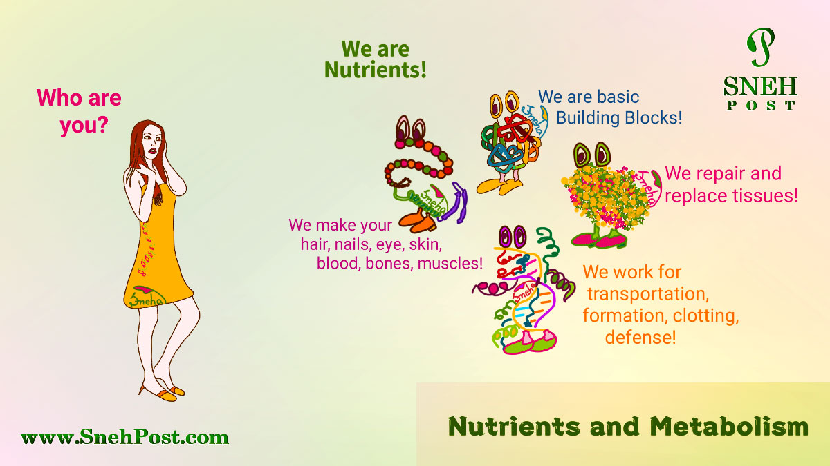 Nutrition guide on nutrients' metabolism and body mechanism: Cartoon of a lady asking who are you and the illustration of nutirents structures answering we are building blocks, we make body parts, we repair and replace tissues, we transport, formate, make clots, and defense