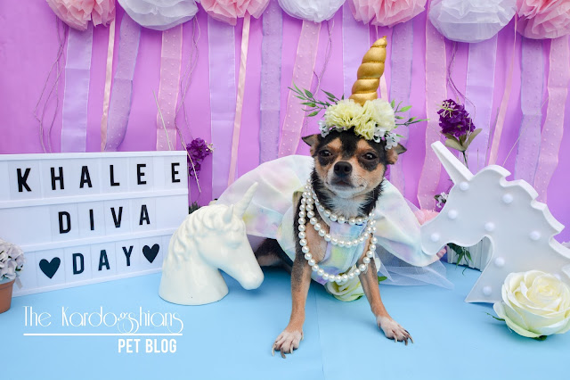 Khaleesi 3rd Diva Day (Birthday Pawty)