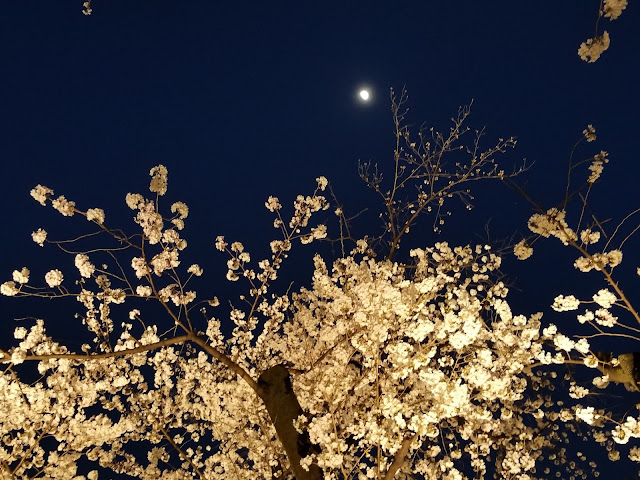 Mori Garden, Cerezos en flor, Cherry, Blossoms, Sakura, Roppongi Hills, Hanami, Minato, Tokyo, Tokio, Japón, Japan, Viaje a Japón, Japan Travel, Elisa N, Blog de Viajes, Lifestyle, Travel, Torre Mori
