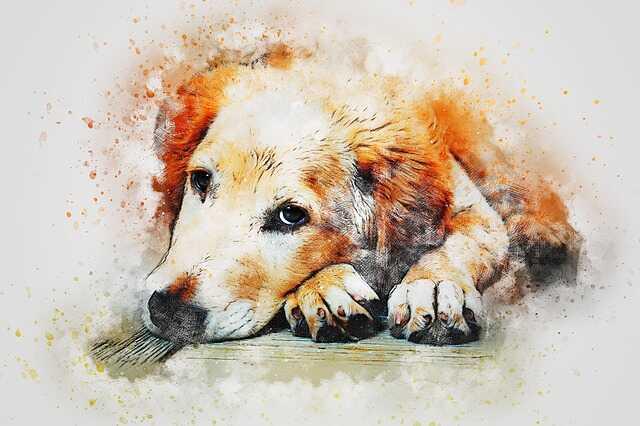 Dog HD Free Photos Download