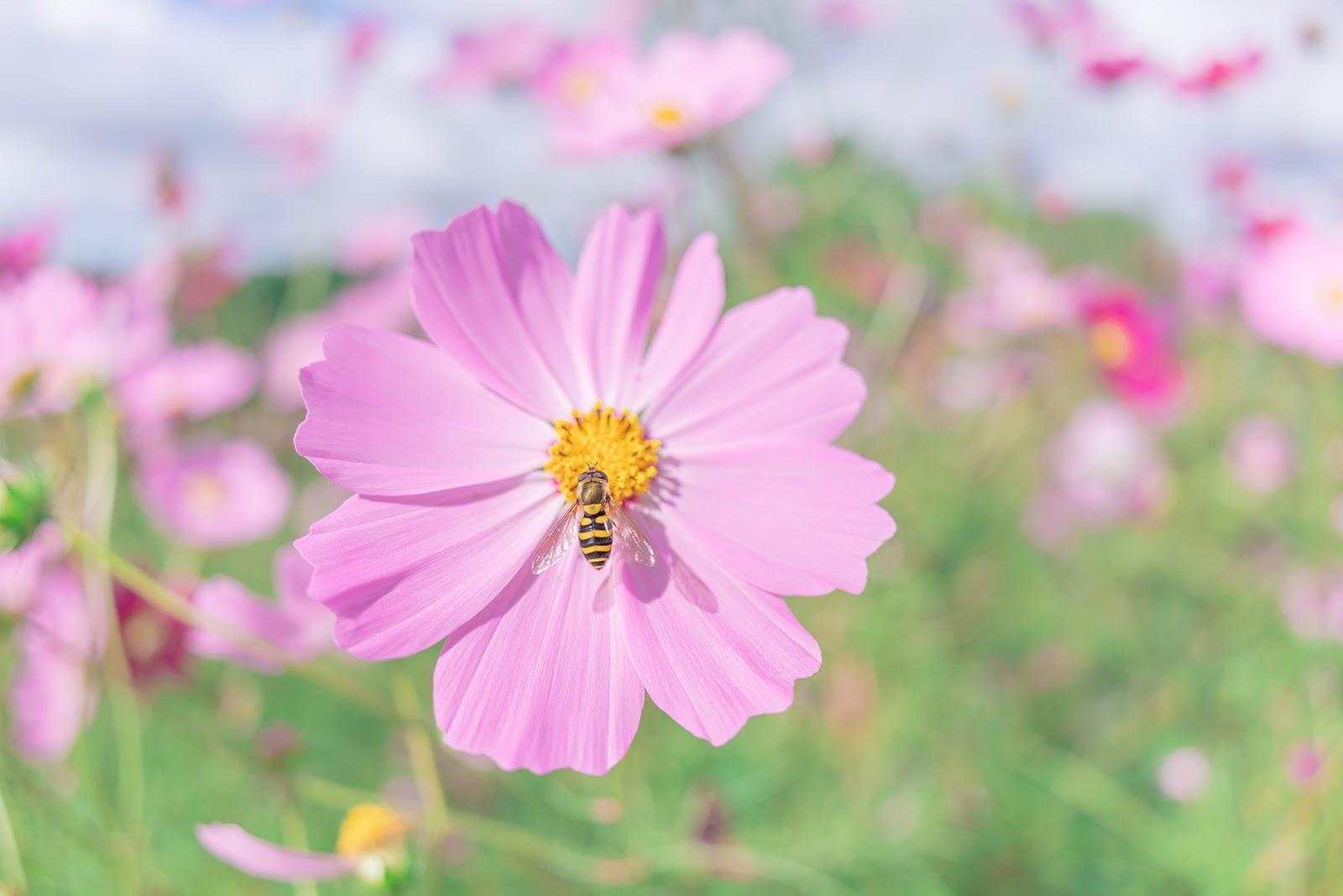 Цветок и пчела