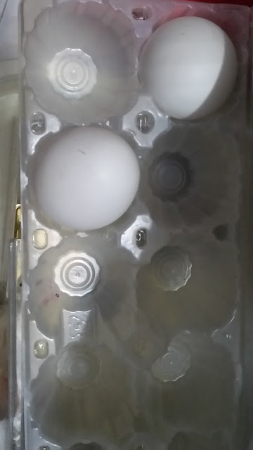 Fresh two white eggs in a tray
