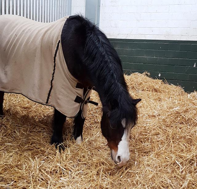 Vom Glück dieser Erde: Urlaub auf dem Küselhof und Reiterhof Witt auf Fehmarn. Das Pony Max ist der Liebling aller kleinen Kinder und wird beim Ponyführen eingesetzt.