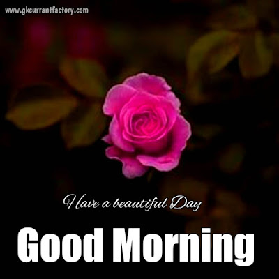 Good morning nature images, Good morning images with nature, Good morning nature images hd,  Good morning nature images free download, Good morning nature images with flowers, Good morning nature images for whatsapp