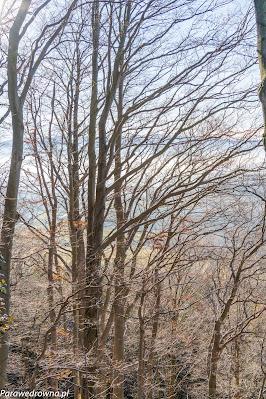 A na koniec pożegnalne foto ze szczytu Stromca