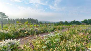 El gran jardín amurallado de Gordon Castle en Escocia rediseñado y actualizado por Arne Maynard