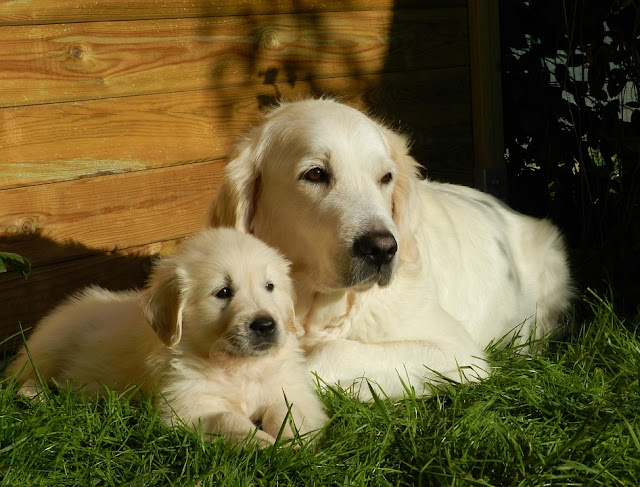 Pet Dog Care
