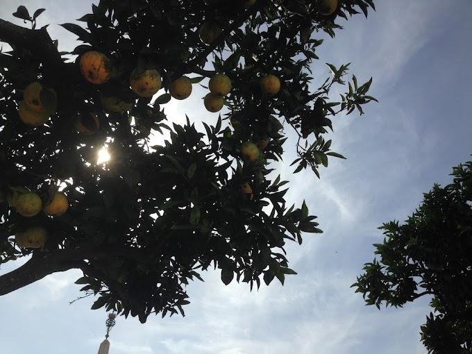 Eventos del otoño en el Algarve