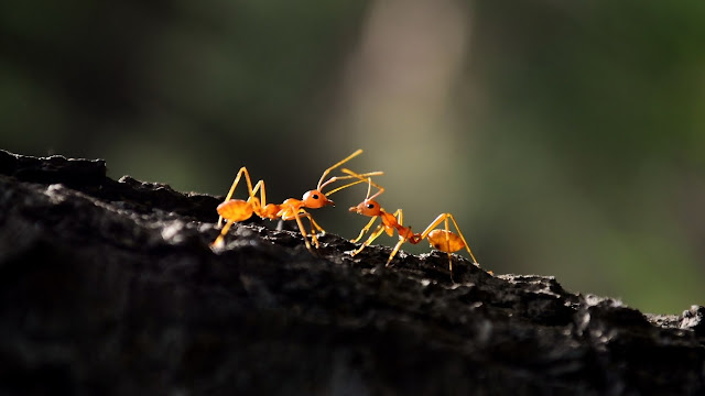 Doa Nabi Sulaiman Ketika Bertemu dengan Kawanan Semut (Tafsir Al-Mishbah)