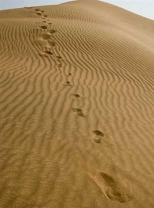 Stranded in Dubai?