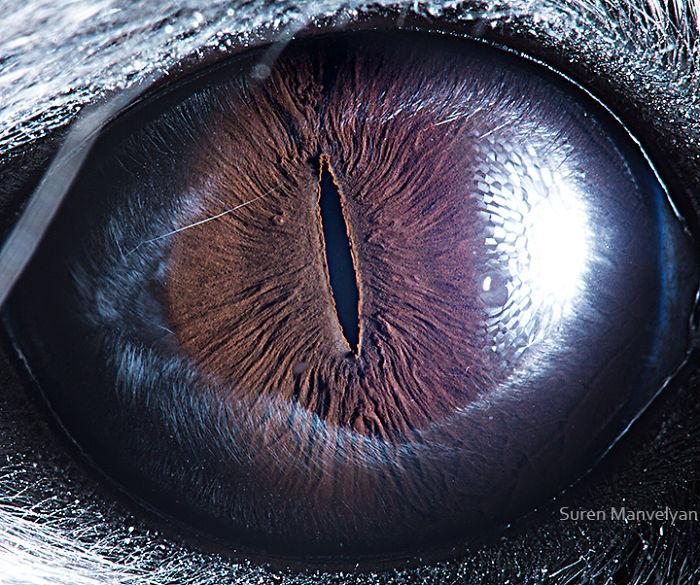 Chinchilla Eyes Close Up Photograph