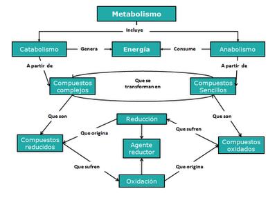 Metabolismo y Soluciones: Mapa de soluciones