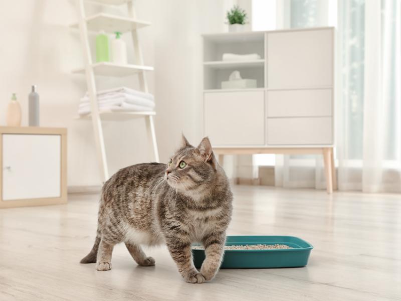 kot znaczy moczem, kot załatwia się poza kuwetą, kot sika poza kuwetą, kot robi poza kuwetą, kot nie robi do kuwety, kot sika na pościel, kot sika po kątach, kot robi kupę poza kuwetą, kot brudzi w domu, kot nie korzysta z kuwety, żwirek dla kota, koci behawiorysta, kuweta automatyczna, kot złośliwy, kot chory, kot warszawski
