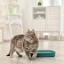 Kot załatwia się poza kuwetą - co robić?