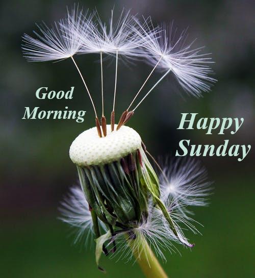 Good Morning Happy Sunday