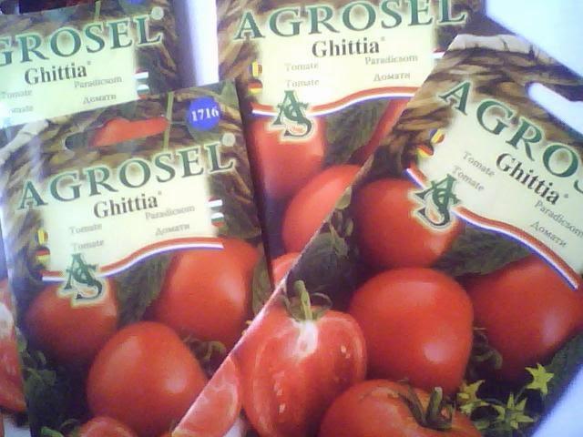 seminte tomate pentru gradina si solar ghittia