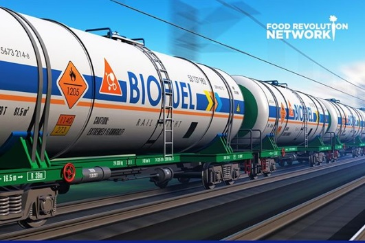 Ilustrasi Biofuel