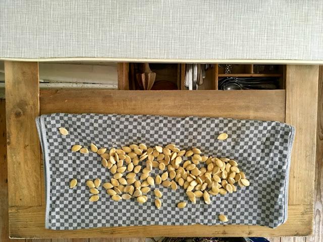 Kürbiskerne trocknen auf einem Geschirrtuch