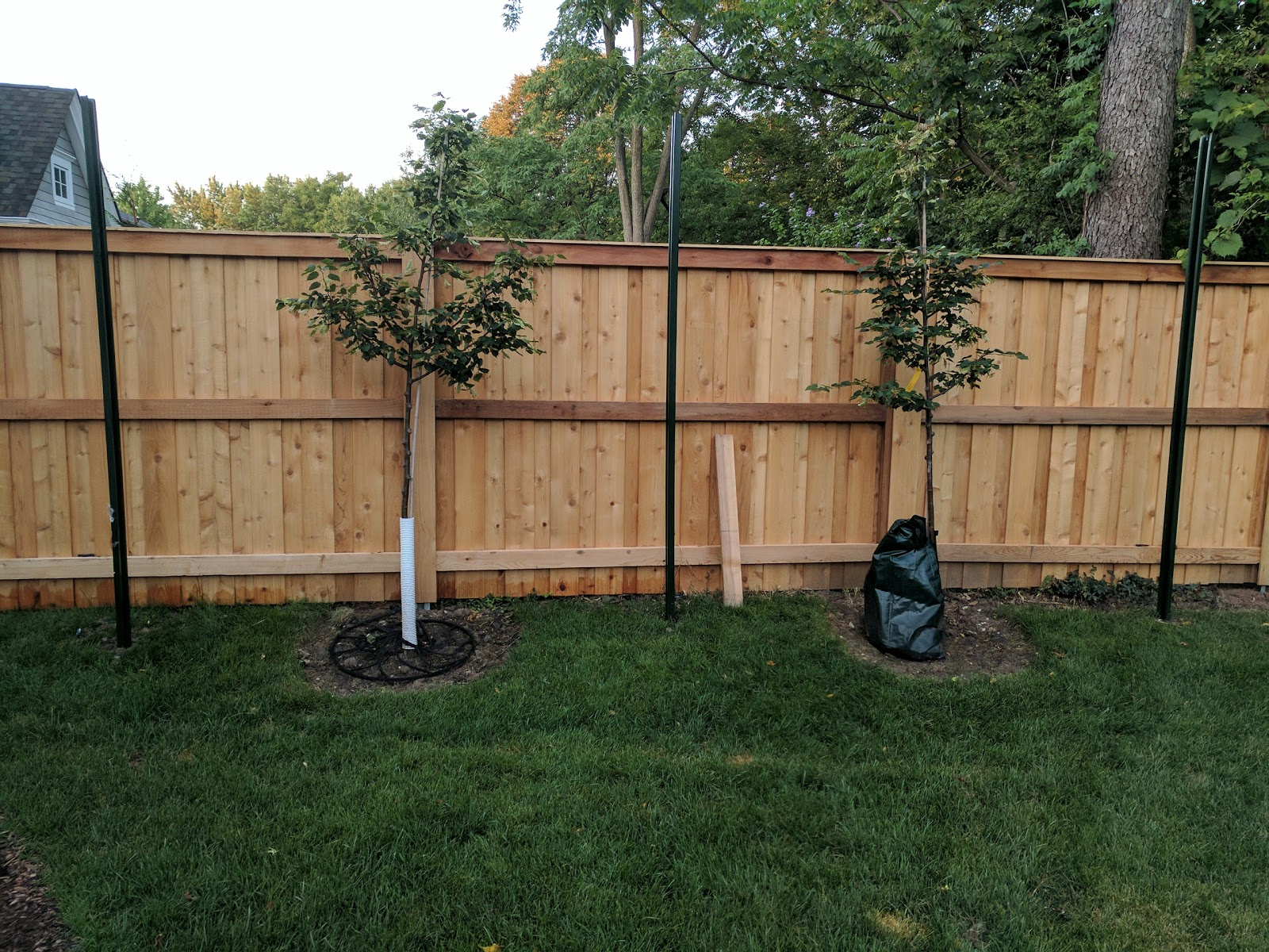 Posts Installed for Espalier Linden Trees