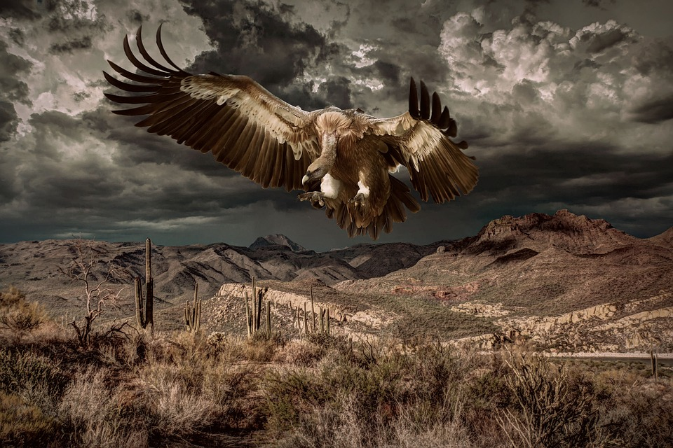 गिद्ध से जुड़े 12 रोचक तथ्य - Interesting facts about Vultures in Hindi