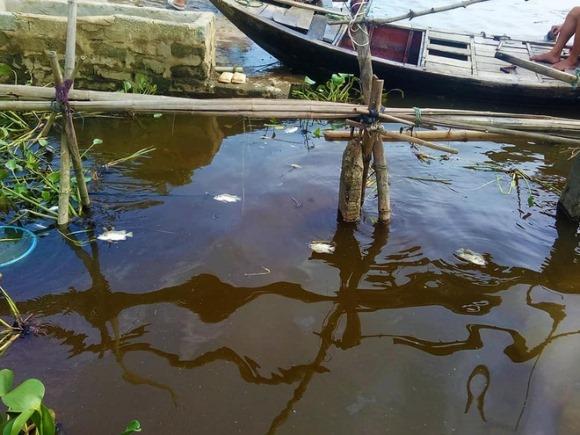 Lại xuất hiện hàng tấn cá chết nổi trắng sông ở Hà Tĩnh