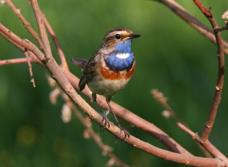 Познай свой край родной: Себежский национальный парк