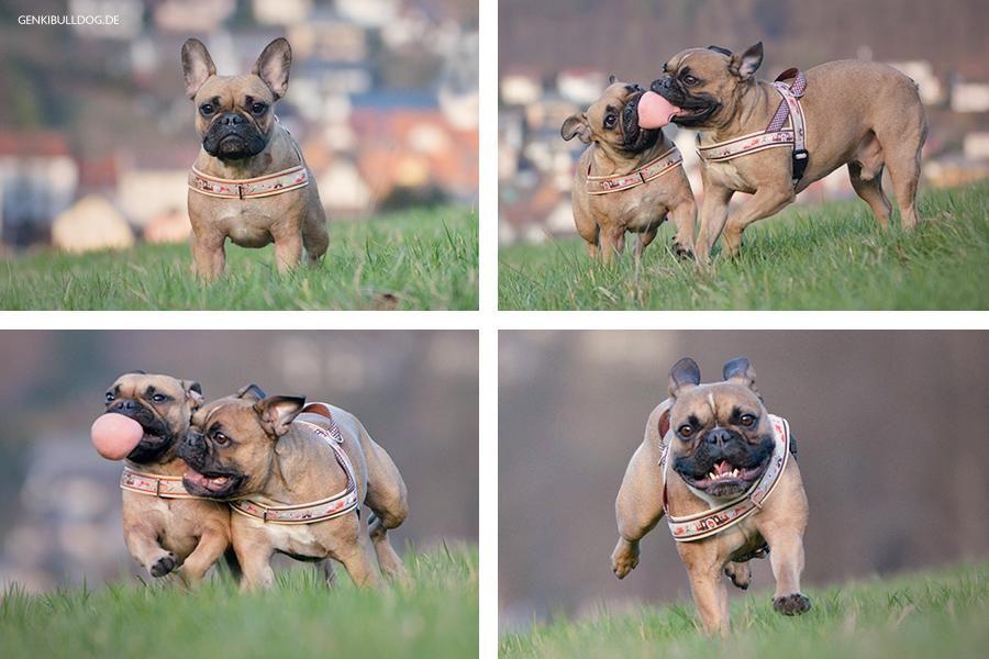 Hundeblog Französische Bulldogge Ausflug