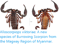 https://sciencythoughts.blogspot.com/2018/08/alloscorpiops-viktoriae-new-species-of.html