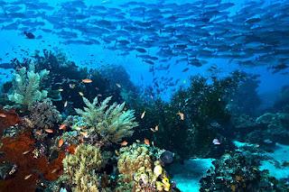 Sumber Daya Alam perairan