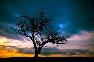 Puisi Rindu Hello Tree Karya Siti Masita