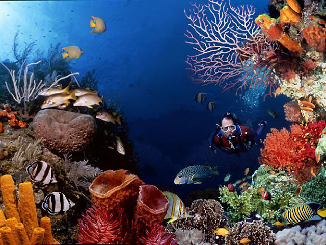 There are a multifariousness sorts of fish ornamental as well as coral reefs who charming inward this house BaliTourismMap: The Beauty of Bunakens Underwater