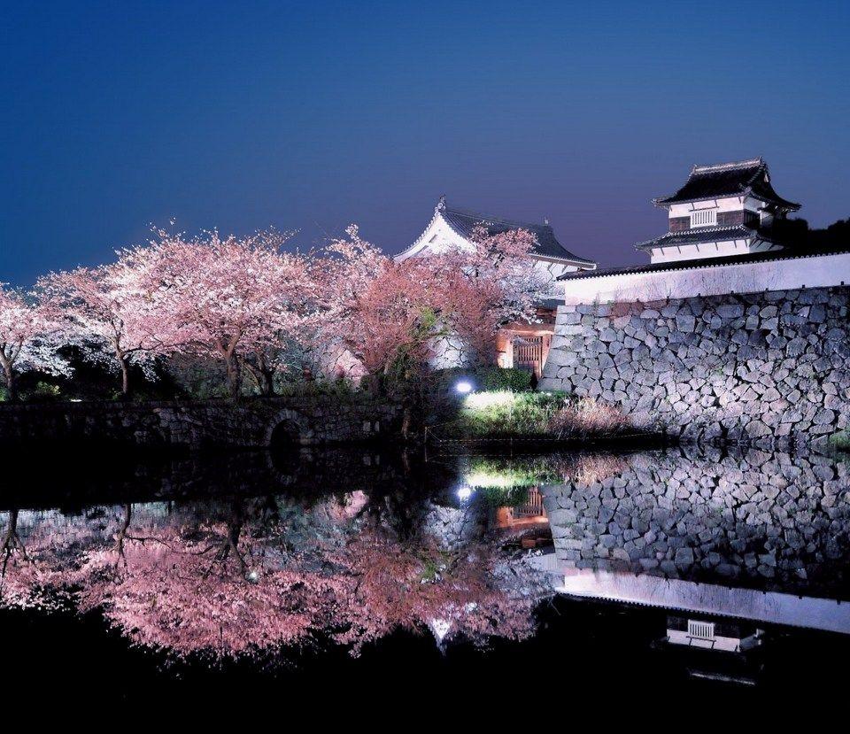 Aktiviti Popular Semasa Musim Sakura di Jepun