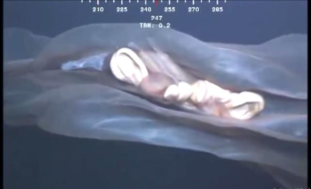 stvorenje iz dubina okeana
