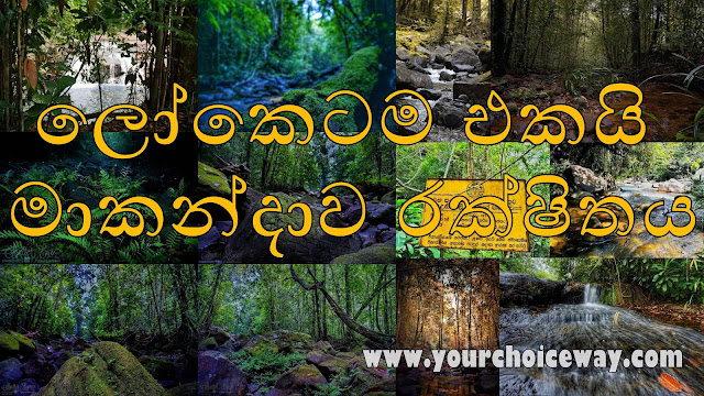 ලෝකෙටම එකයි - මාකන්දාව රක්ෂිතය ☘️⛰🍃🌱 (Makandawa) - Your Choice Way
