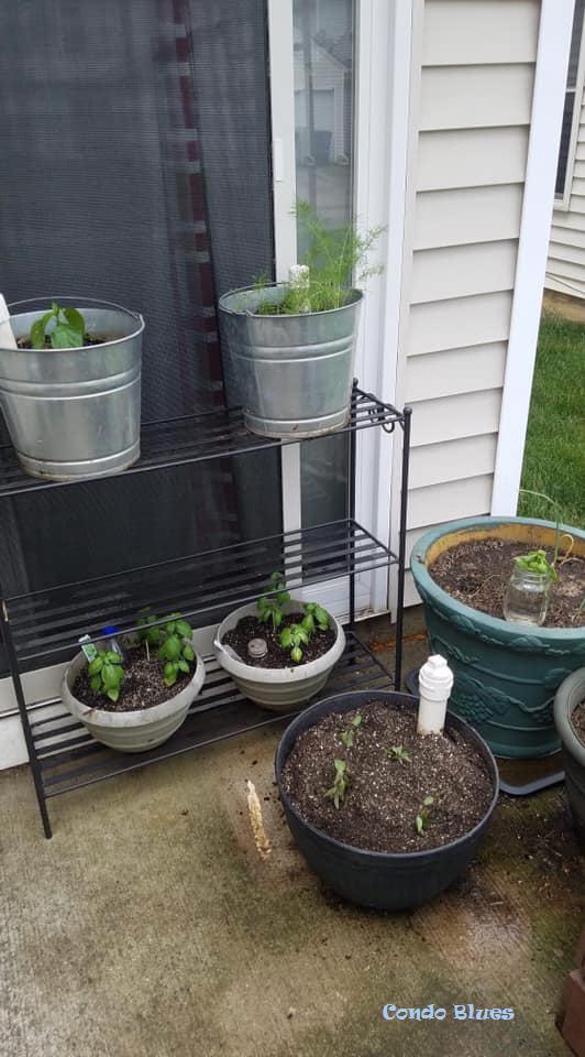 Small garden plant organizer ideas