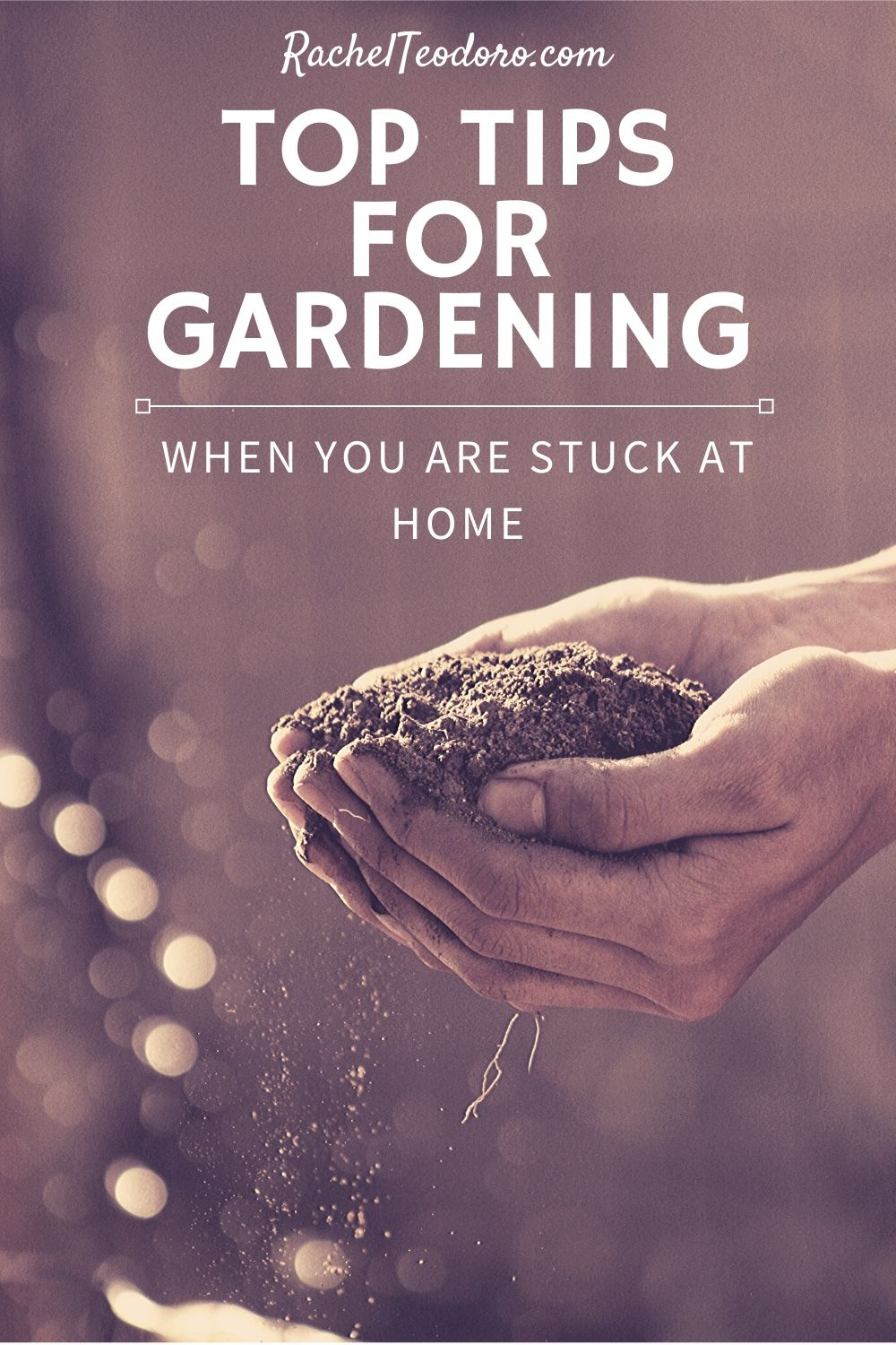 spring garden and planting tips