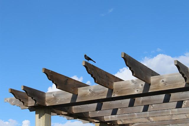 Bird on pergola