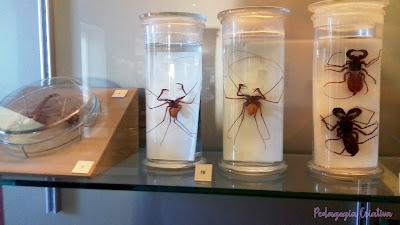 escorpiões e aranhas Museu Nacional