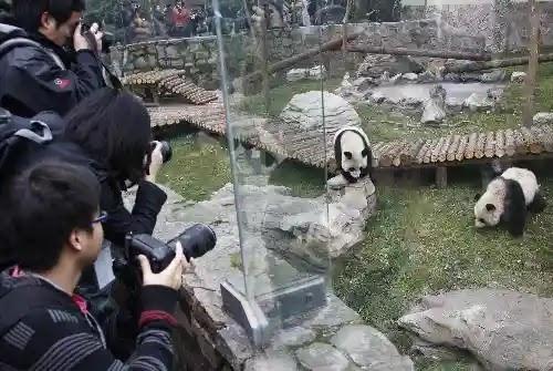 حديقة الحيوان في شنغهاي  Shanghai Zoo