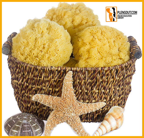 Pict: Shower sponges are harvested mainly in the Mediterranean. Caribbean, and Red Seas.